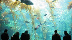 birch-aquarium